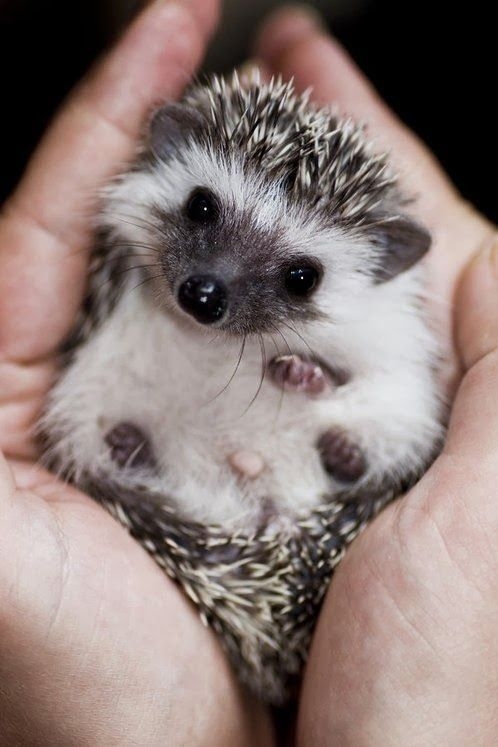 Sweet hedgehog - the face Cool websites where you can buy sexy dresses ...